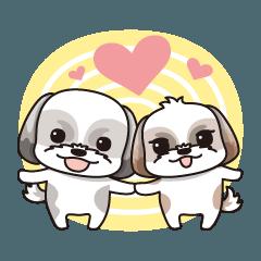 The Shih Tzu baby and nini