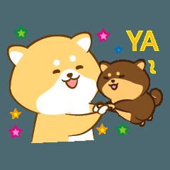 Cute Shiba Inu with its new friend !
