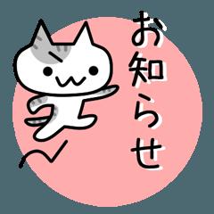 ネコのお知らせ