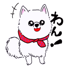 愛嬌たっぷり ポメラニアンの コロ 犬