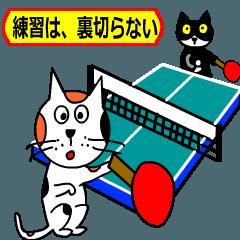 卓球をする猫の銀ちゃん