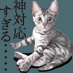 猫好きなみなさんに贈るスタンプ