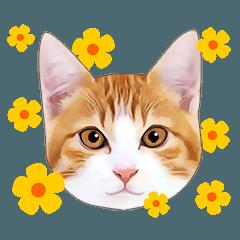 [LINEスタンプ] いろんな茶白猫♪