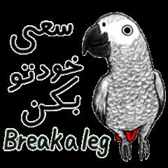 KASKO (ペルシア語)