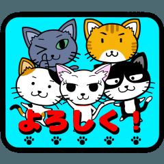ネコ、ねこ、猫+2