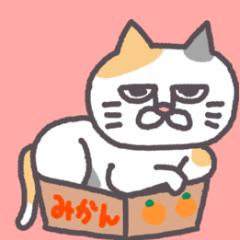 [LINEスタンプ] 平和な猫の幸せな日々2